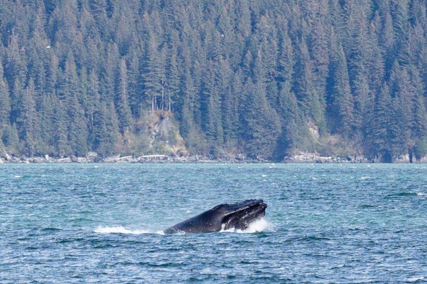 Seward: Kenai Fjords National Park 6-Hour Cruise